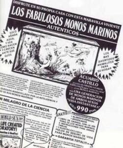 monos-marinos